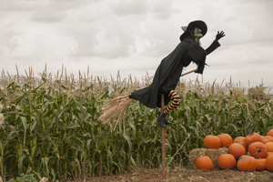 Witch and the Cornfield