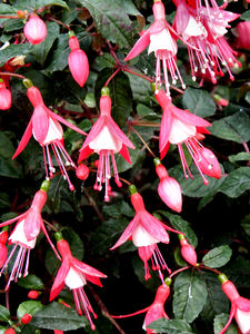 fuchsia features2