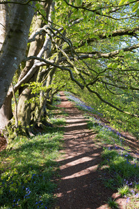 Woodland path in spring