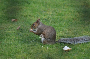 Squirrel in my garden: I took this picture of this lovely Squirrel in my garden