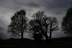 trees: the Oak tree in the middle is one of the oldest trees in the Netherlands. It was planted between 1500 and 1600.  In this light it looks really spooky. It is a little pilgrimage place for the local people, It is called the 'kroezeboom'