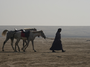 Riding Horses in the desert: People are riding the Horses for fun in the desert and taking horse trips long inside the sand hills and sand dunes of desert areas in the emptiness of Saudi Arabia