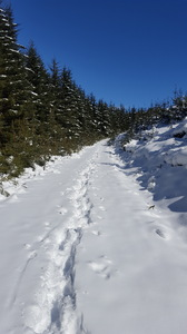 Snowy footsteps: Trail of footsteps in deep snow, ascending hill