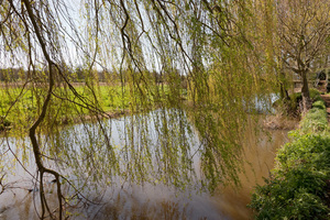 River with willow trees