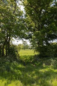Field entrance and footpath