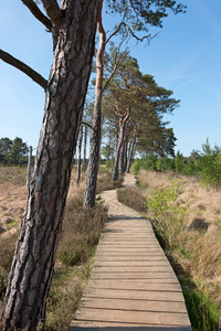 Bog boardwalk: A boardwalk over heathland bog in Surrey, England.