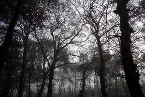 Foggy wood 1