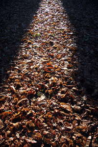 Autumnal light path 1