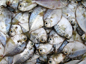 heap of fish: fresh fish at the local market, they looks like pretty butterflies!