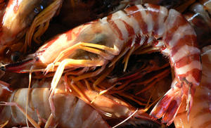 Shrimp: Tiger Prawns/ Shrimp at the wharf