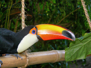 Toucan - You looking at me ?