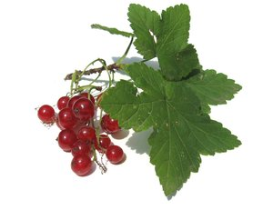 red currant: none
