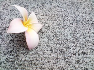 Frangipani on Granite 4