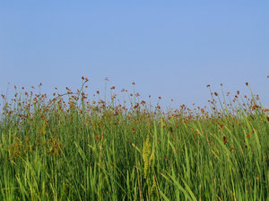 Grassy Field in PEI: Please let me know if you are able to use my pictures for something.Even if it's something small --I would be absolutely thrilled to know if they came in useful for anyone!