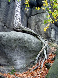 tree root on the rocks
