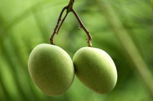 Green mangos 1