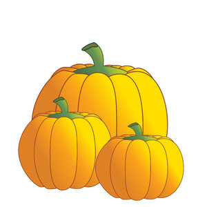 Pumpkins: Pumpkins on a white background.