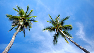 Beach palmtrees