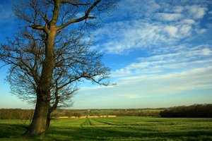 English Countryside: A view across the fields somewhere in Essex, England