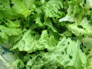 lettuce salad: none