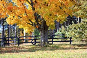 Autumn in Ontario 3