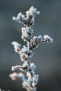 Frost: Details of frozen plants