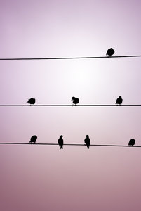 birds & wires: no description