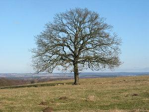 Solitary Tree February