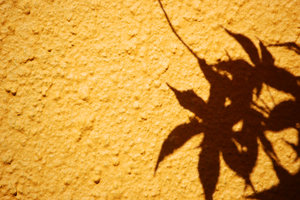 acer shadow