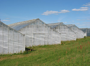greenhouse 1: Location:Ringsjön,Skåne- ,SwedenDate: 2006-07-15