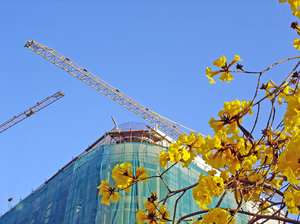 Construction in bloom