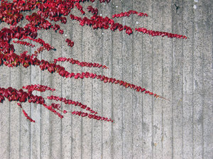 wall and plant texture