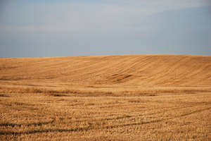 Harvested Field 3