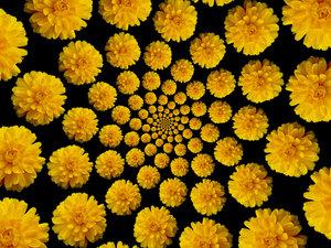 Flower Warps 3