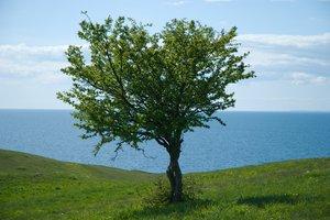 Tree on Green Hills
