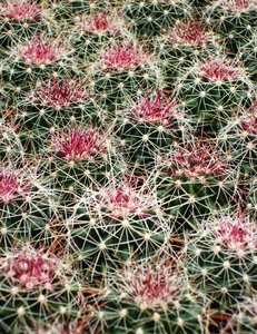 Cactus texture