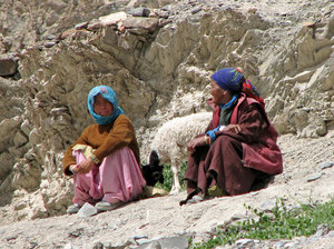 Ladakhi Women with a Sheep