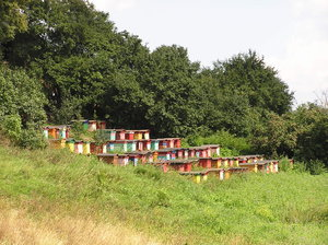 Hives: Some bee hives.