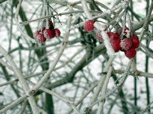 Frozen Berries 1