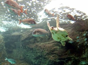 dude - ocean turtle: shot was taken at crete aquarium