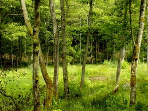 Green as a forrest: Springforrest at its best