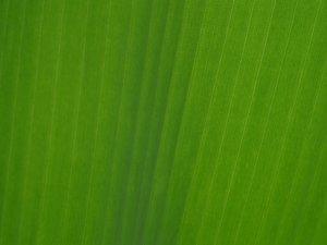 Texture: Banana leaf