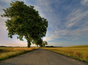 Road, crop and tree - HDR