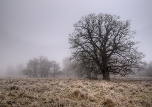 Frost and mist - HDR