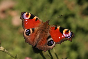 Butterfly 1: http://www.scottliddell.n ..
