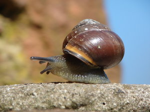 snail: a snail on a wall