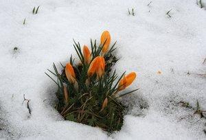 spring has broken
