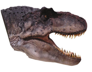 Dino head: A rubber head of a dino... or a head of a living beast. How do you think? Please let me know if you decide to use it!