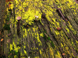 Rotten wood 1: No description