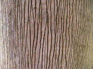 Texture - palm tree